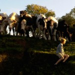 What I saw with Blue today… Cows!