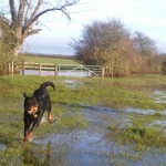 What I Saw on Blue's Walk Today – Floods
