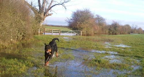 North Dorset-20121221-00614