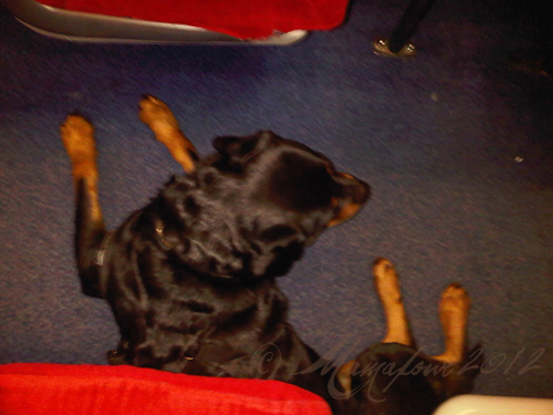 dog on train in aisle